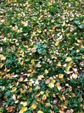 在绿草的秋叶从上面调遣,观看 库存图片