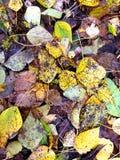 在绿草的秋叶从上面调遣,观看 免版税库存照片