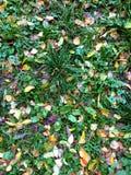 在绿草的秋叶从上面调遣,观看 库存照片
