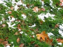 在绿草的第一雪 免版税库存图片