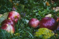 在绿草的红色苹果 免版税库存照片