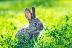 在绿草的美丽的幼小小兔子 免版税库存图片