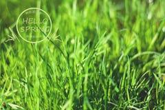 在绿草的词组你好春天 免版税库存照片