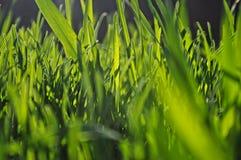 在绿草的选择聚焦 免版税库存图片