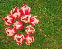 在绿草的郁金香花束 库存照片