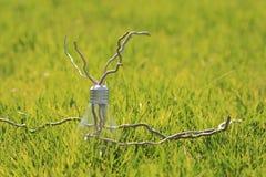 在绿草的闪亮指示 免版税图库摄影