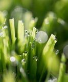 在绿草的露滴 库存照片
