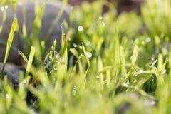 在绿草的露滴 免版税图库摄影