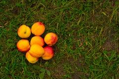 在绿草背景的明亮的油桃  免版税图库摄影