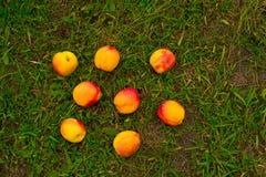 在绿草背景的明亮的油桃  免版税库存照片