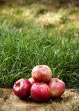在绿草背景的水多的红色苹果  秋天果子 库存照片