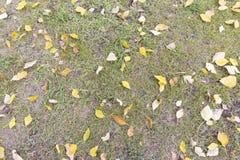 在绿草背景的秋天五颜六色的叶子 顶视图 库存照片