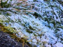 在绿草软的焦点的雪花 与冷天的美丽的白雪在冬天季节 图库摄影