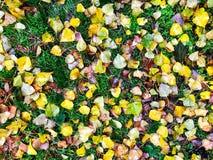 在绿草领域视图的秋叶从上面 库存照片