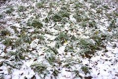 在绿草,冬天的第一雪来临 免版税图库摄影