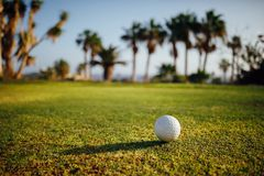 在绿草,在背景的棕榈树的高尔夫球 图库摄影