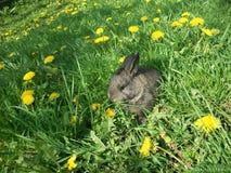 在绿草2的滑稽的兔子 免版税库存照片