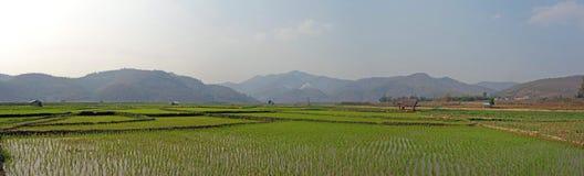 在缅甸的米领域 库存照片