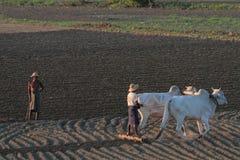 在缅甸的野外工作 库存照片