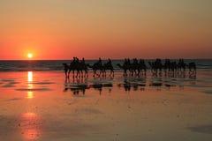 在缆绳海滩的骆驼 库存图片