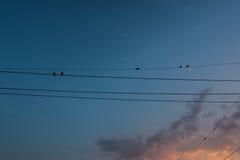 在缆绳的剪影鸟 免版税库存图片
