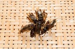 在编篮艺品背景的酥脆油煎的昆虫 免版税库存图片