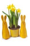 在罐和二个兔宝宝的黄色水仙 免版税库存照片