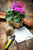 在罐和园艺工具的仙客来在一张老木桌上 图库摄影