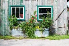 在罐子木盆的花 免版税图库摄影