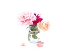 在罐的三朵开花的精美玫瑰 库存照片