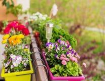 在罐的五颜六色的花在阳台 免版税库存图片