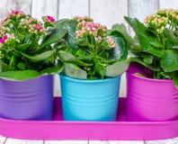 在罐的五颜六色的花 免版税图库摄影