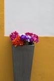 在罐的五颜六色的花 免版税库存照片