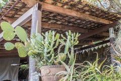在罐的仙人掌在与木瓦屋顶的一个大阳台 库存图片