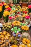 在罐的各种各样的五颜六色的开花的仙人掌在市场上 免版税库存照片