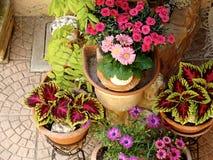 在罐的家庭各种各样的花 设计意大利人庭院 免版税图库摄影