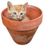 在罐的小猫 免版税库存照片