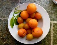 在罐的杏子 免版税库存图片
