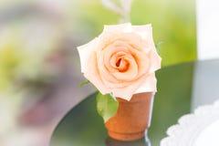 在罐的柔和的淡色彩玫瑰 免版税库存照片