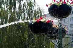 在罐的浇灌的花从水管 免版税库存图片