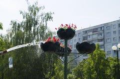 在罐的浇灌的花从水管 库存图片