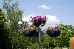 在罐的浇灌的花从水管 免版税库存照片