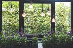 在罐的紫罗兰色花有垂悬从天花板的温暖的电灯泡的 库存图片