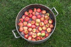 在罐的红色苹果 库存图片