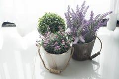 在罐的花和矮人树有从窗口的阳光的 图库摄影