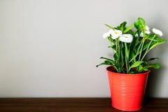 在罐的花塑料 免版税库存图片