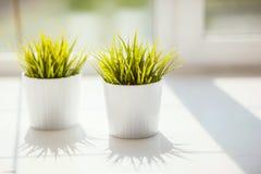 在罐的草在窗台 图库摄影