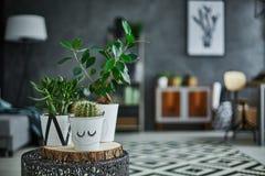 在罐的装饰绿色室内植物 库存照片