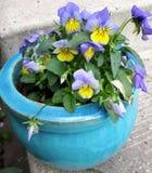 在罐的蝴蝶花 库存图片