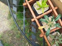 在罐,顶视图的一点美丽的仙人掌 库存照片